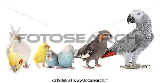 Photos d'oiseaux sur fond blanc K3193910