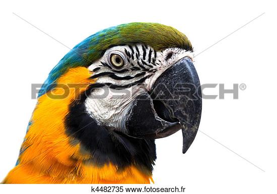 Photos d'oiseaux sur fond blanc K4482710