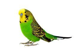 Photos d'oiseaux sur fond blanc K6228010