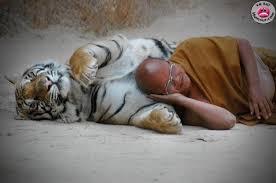 (Re)[Présentation du Tigre], du Kalthu, de la néo-philosophie kalthuienne.  Images11