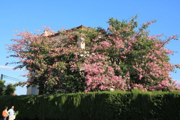 ondées d'octobre, le jardin renaît Chorys10