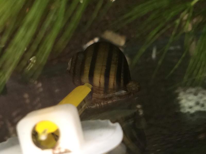C'est quoi cet escargot? Img_1635