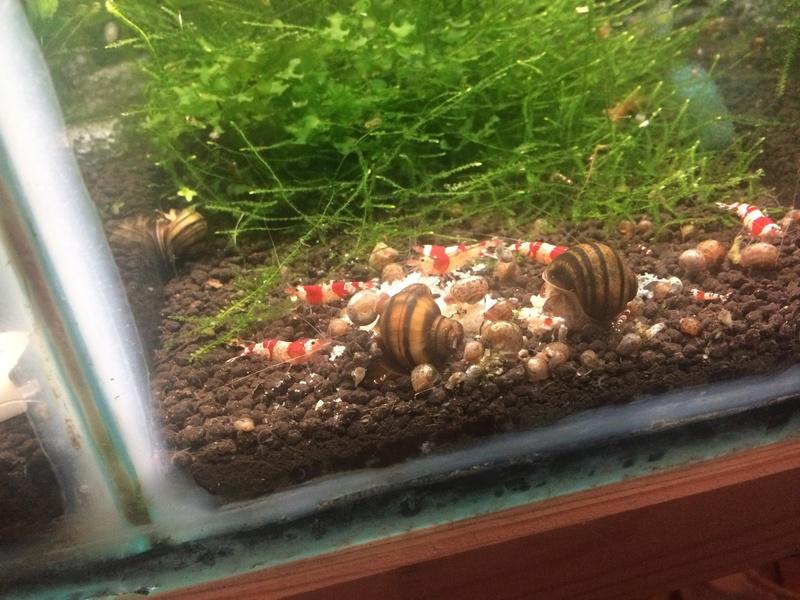 C'est quoi cet escargot? Img_1643