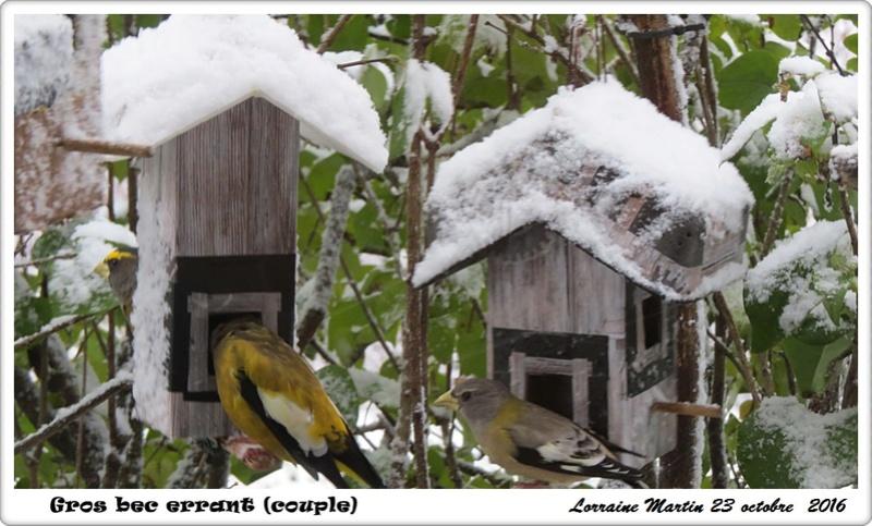 Oiseaux dans la neige  Gros_b24