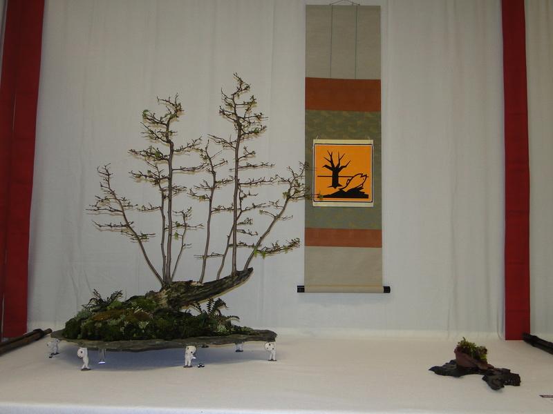 Salon national du bonsaï - Parc Oriental de Maulévrier 10 et 11 septembre  Dsc09715