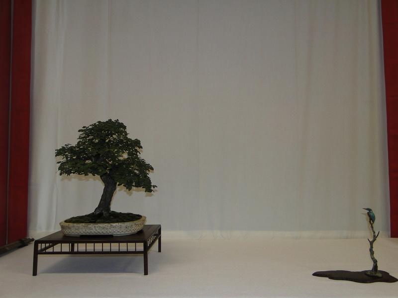 Salon national du bonsaï - Parc Oriental de Maulévrier 10 et 11 septembre  Dsc09716