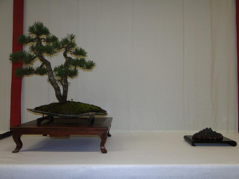 Salon national du bonsaï - Parc Oriental de Maulévrier 10 et 11 septembre  Dsc09719