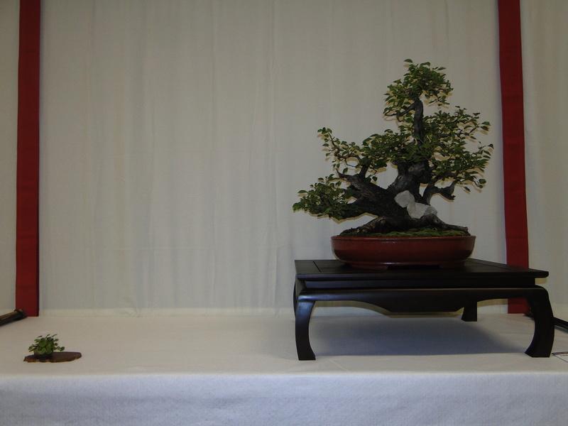 Salon national du bonsaï - Parc Oriental de Maulévrier 10 et 11 septembre  Dsc09720
