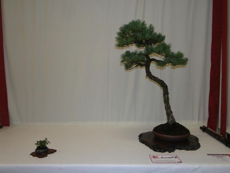 Salon national du bonsaï - Parc Oriental de Maulévrier 10 et 11 septembre  Dsc09721