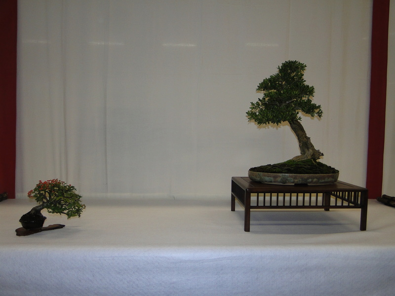 Salon national du bonsaï - Parc Oriental de Maulévrier 10 et 11 septembre  Dsc09723
