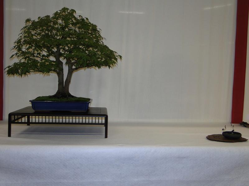 Salon national du bonsaï - Parc Oriental de Maulévrier 10 et 11 septembre  Dsc09724