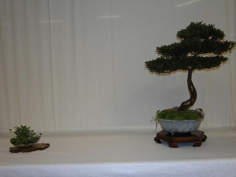 Salon national du bonsaï - Parc Oriental de Maulévrier 10 et 11 septembre  Dsc09725