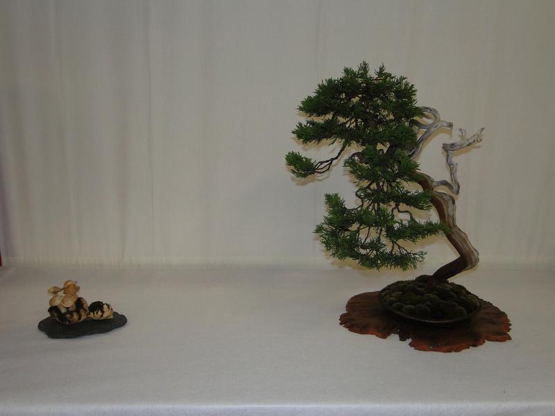 Salon national du bonsaï - Parc Oriental de Maulévrier 10 et 11 septembre  Dsc09726