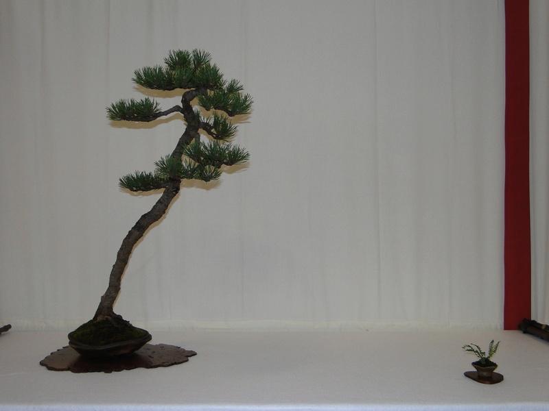 Salon national du bonsaï - Parc Oriental de Maulévrier 10 et 11 septembre  Dsc09727