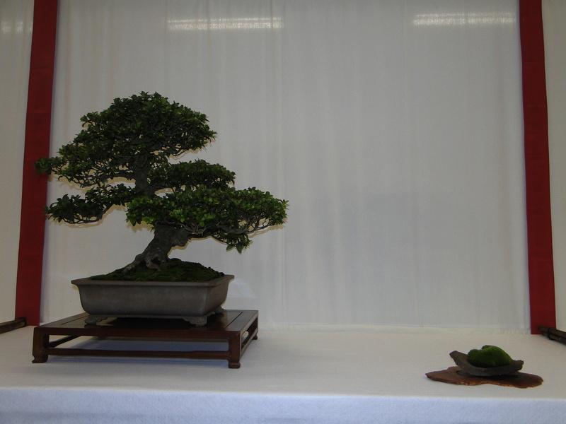 Salon national du bonsaï - Parc Oriental de Maulévrier 10 et 11 septembre  Dsc09728