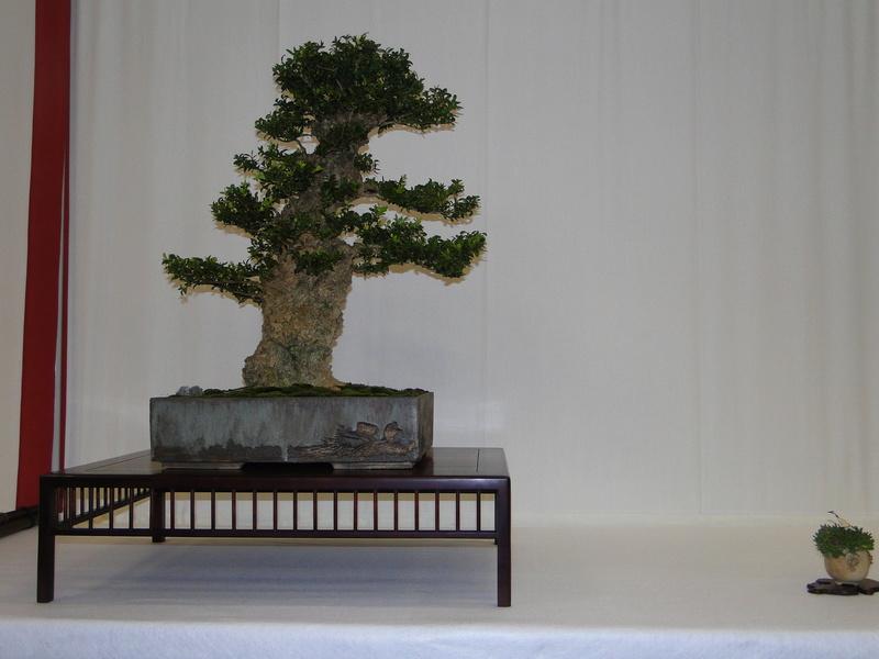 Salon national du bonsaï - Parc Oriental de Maulévrier 10 et 11 septembre  Dsc09729