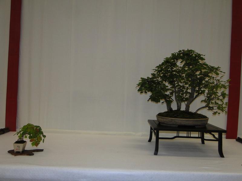 Salon national du bonsaï - Parc Oriental de Maulévrier 10 et 11 septembre  Dsc09730
