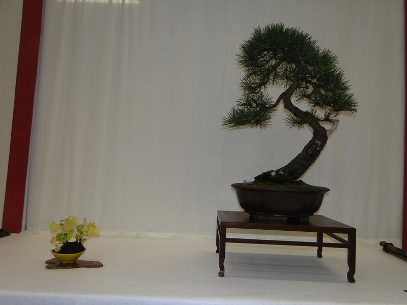 Salon national du bonsaï - Parc Oriental de Maulévrier 10 et 11 septembre  Dsc09731