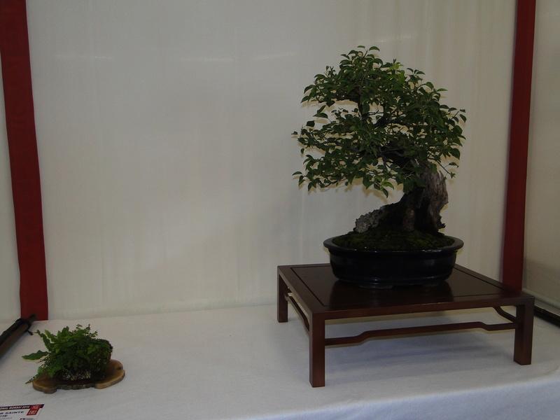 Salon national du bonsaï - Parc Oriental de Maulévrier 10 et 11 septembre  Dsc09732