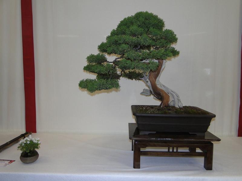 Salon national du bonsaï - Parc Oriental de Maulévrier 10 et 11 septembre  Dsc09733