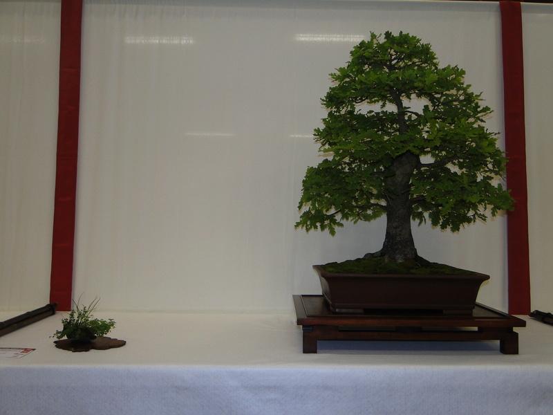 Salon national du bonsaï - Parc Oriental de Maulévrier 10 et 11 septembre  Dsc09734
