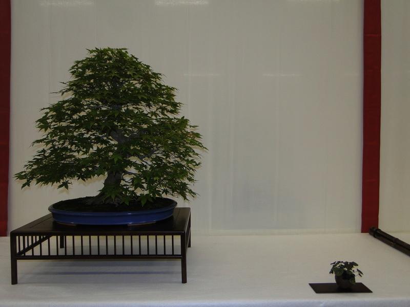Salon national du bonsaï - Parc Oriental de Maulévrier 10 et 11 septembre  Dsc09735