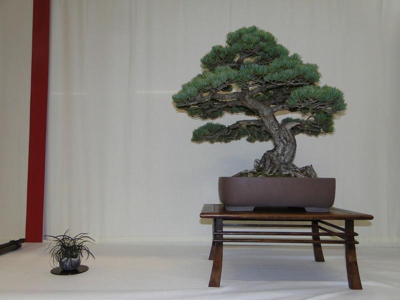 Salon national du bonsaï - Parc Oriental de Maulévrier 10 et 11 septembre  Dsc09736