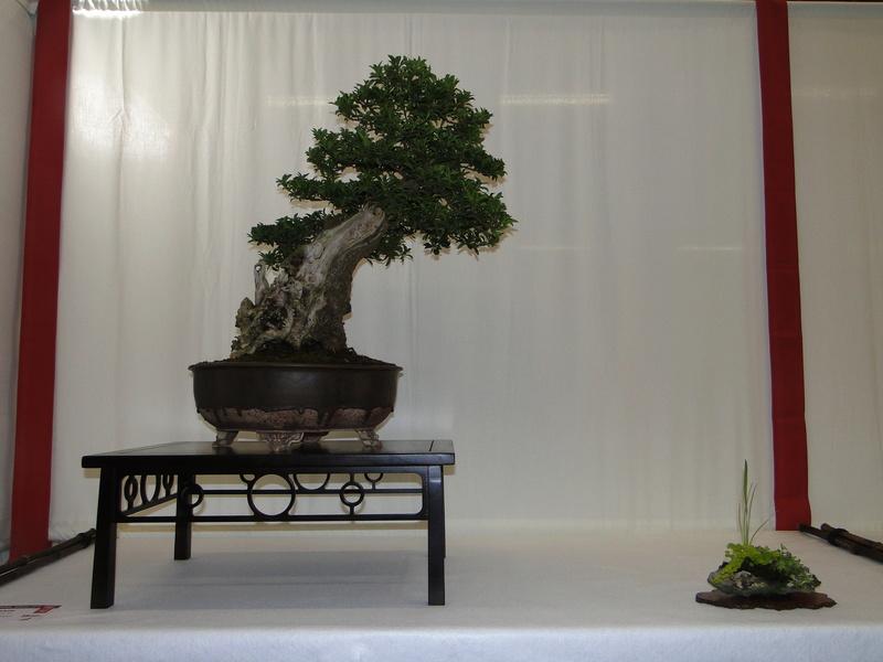 Salon national du bonsaï - Parc Oriental de Maulévrier 10 et 11 septembre  Dsc09737