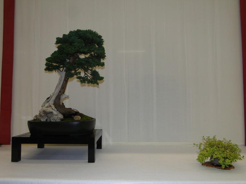 Salon national du bonsaï - Parc Oriental de Maulévrier 10 et 11 septembre  Dsc09738