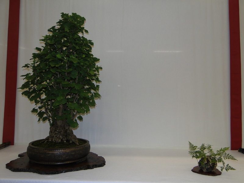 Salon national du bonsaï - Parc Oriental de Maulévrier 10 et 11 septembre  Dsc09740
