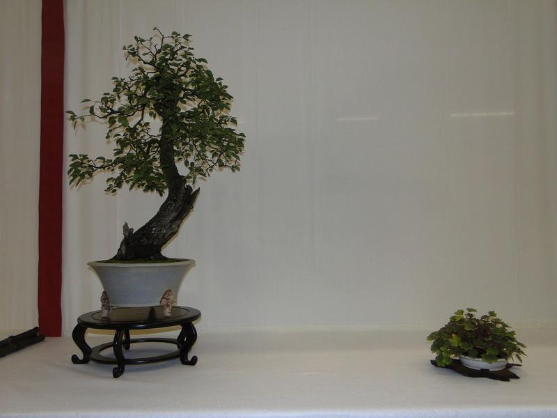 Salon national du bonsaï - Parc Oriental de Maulévrier 10 et 11 septembre  Dsc09741