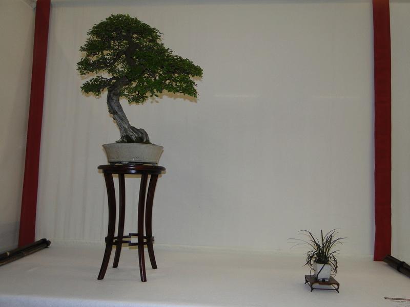 Salon national du bonsaï - Parc Oriental de Maulévrier 10 et 11 septembre  Dsc09742