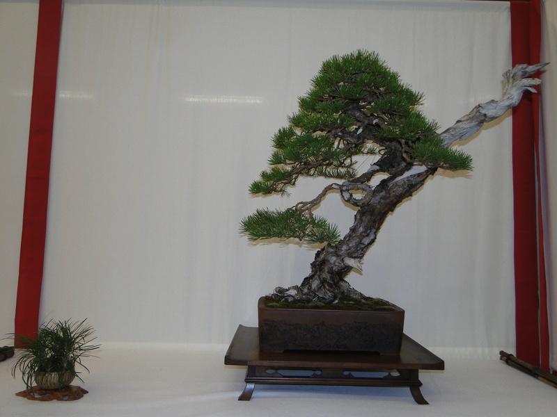 Salon national du bonsaï - Parc Oriental de Maulévrier 10 et 11 septembre  Dsc09743