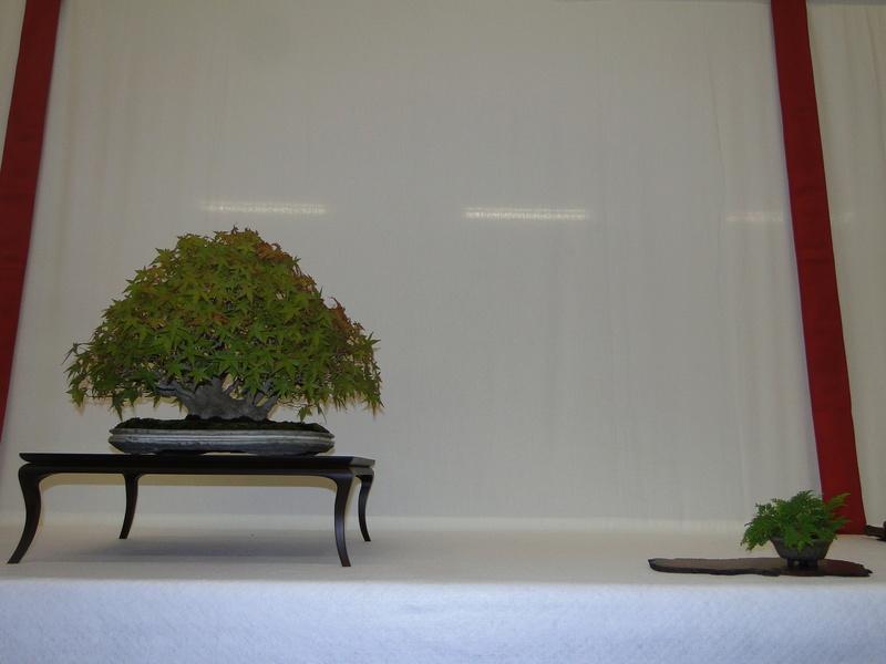 Salon national du bonsaï - Parc Oriental de Maulévrier 10 et 11 septembre  Dsc09744