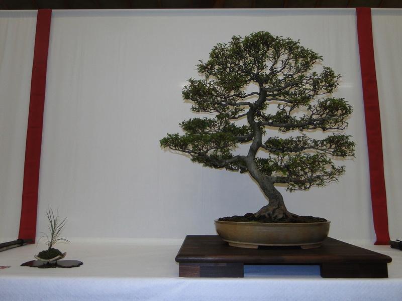 Salon national du bonsaï - Parc Oriental de Maulévrier 10 et 11 septembre  Dsc09745