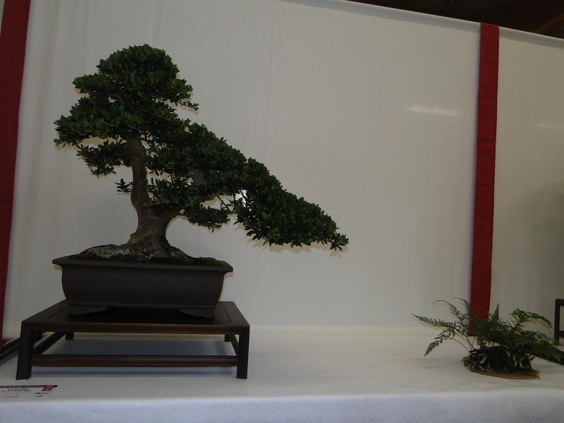 Salon national du bonsaï - Parc Oriental de Maulévrier 10 et 11 septembre  Dsc09748