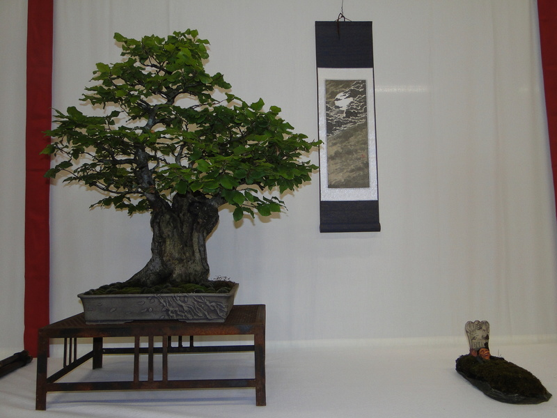 Salon national du bonsaï - Parc Oriental de Maulévrier 10 et 11 septembre  Dsc09749