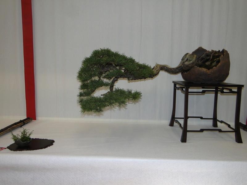 Salon national du bonsaï - Parc Oriental de Maulévrier 10 et 11 septembre  Dsc09813