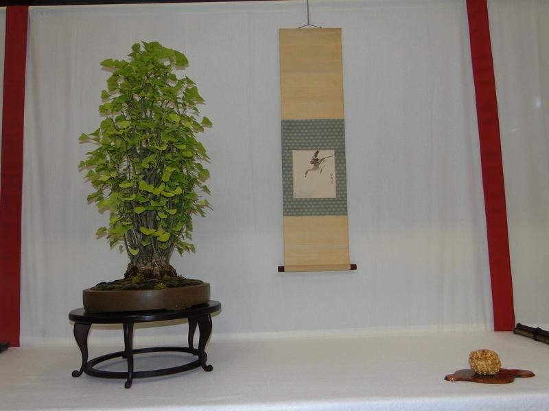 Salon national du bonsaï - Parc Oriental de Maulévrier 10 et 11 septembre  Dsc09814