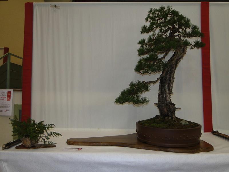 Salon national du bonsaï - Parc Oriental de Maulévrier 10 et 11 septembre  Dsc09815