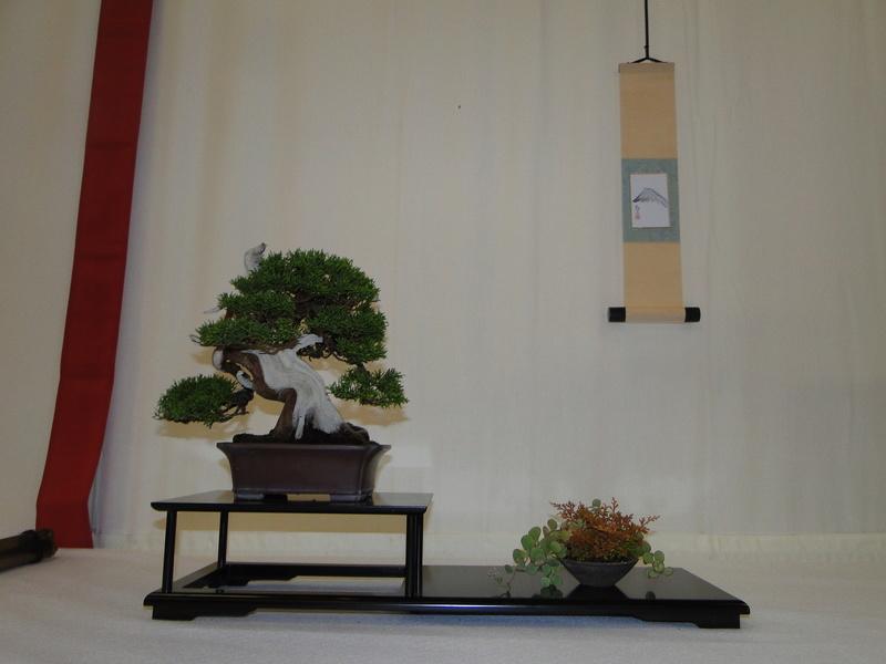Salon national du bonsaï - Parc Oriental de Maulévrier 10 et 11 septembre  Dsc09816