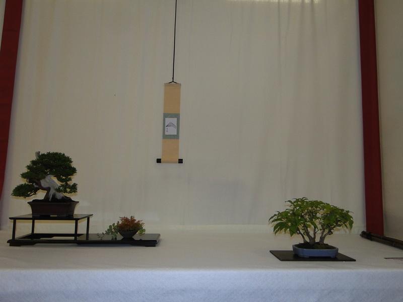 Salon national du bonsaï - Parc Oriental de Maulévrier 10 et 11 septembre  Dsc09817