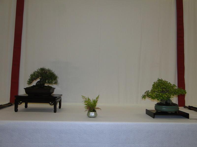 Salon national du bonsaï - Parc Oriental de Maulévrier 10 et 11 septembre  Dsc09819