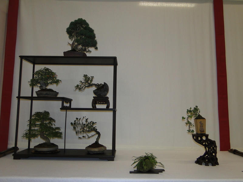 Salon national du bonsaï - Parc Oriental de Maulévrier 10 et 11 septembre  Dsc09821