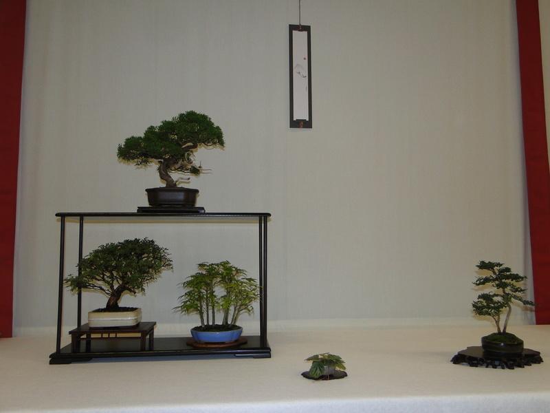 Salon national du bonsaï - Parc Oriental de Maulévrier 10 et 11 septembre  Dsc09822