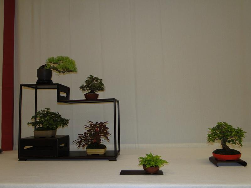 Salon national du bonsaï - Parc Oriental de Maulévrier 10 et 11 septembre  Dsc09823