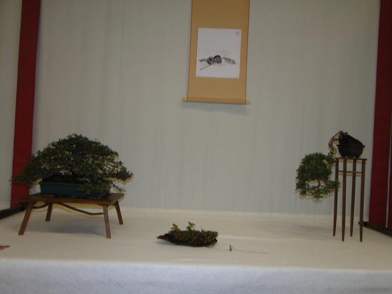 Salon national du bonsaï - Parc Oriental de Maulévrier 10 et 11 septembre  Dsc09824