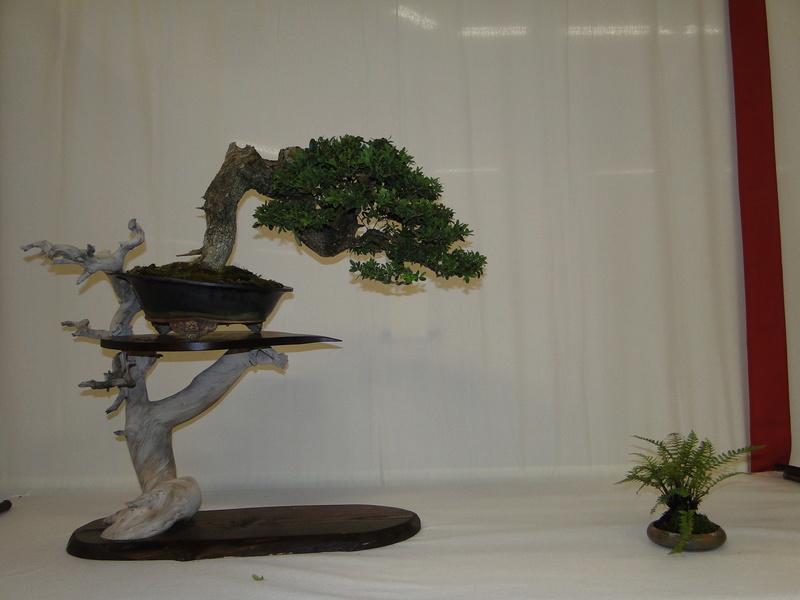 Salon national du bonsaï - Parc Oriental de Maulévrier 10 et 11 septembre  Dsc09825