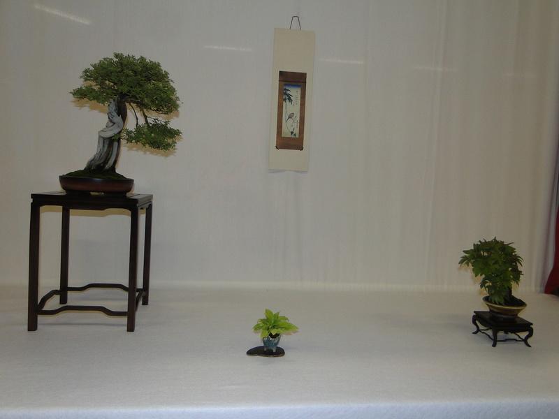 Salon national du bonsaï - Parc Oriental de Maulévrier 10 et 11 septembre  - Page 2 Dsc09826