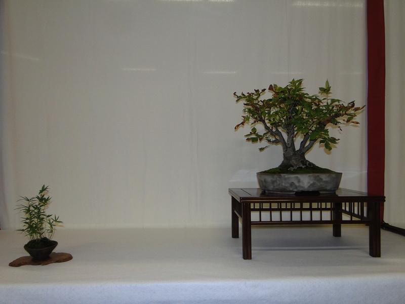 Salon national du bonsaï - Parc Oriental de Maulévrier 10 et 11 septembre  - Page 2 Dsc09827